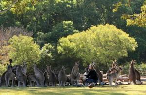 Kangaroo at Lone Pine Koala Sanctuary www.koala.net